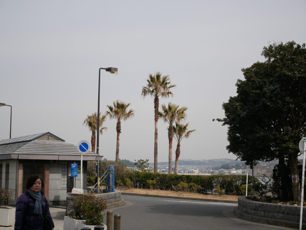 江ノ島の木